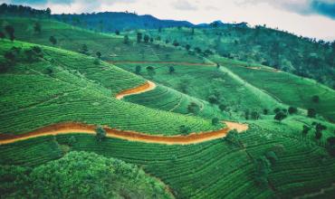 rizieres vert arbres decembre ciel bleu nuages
