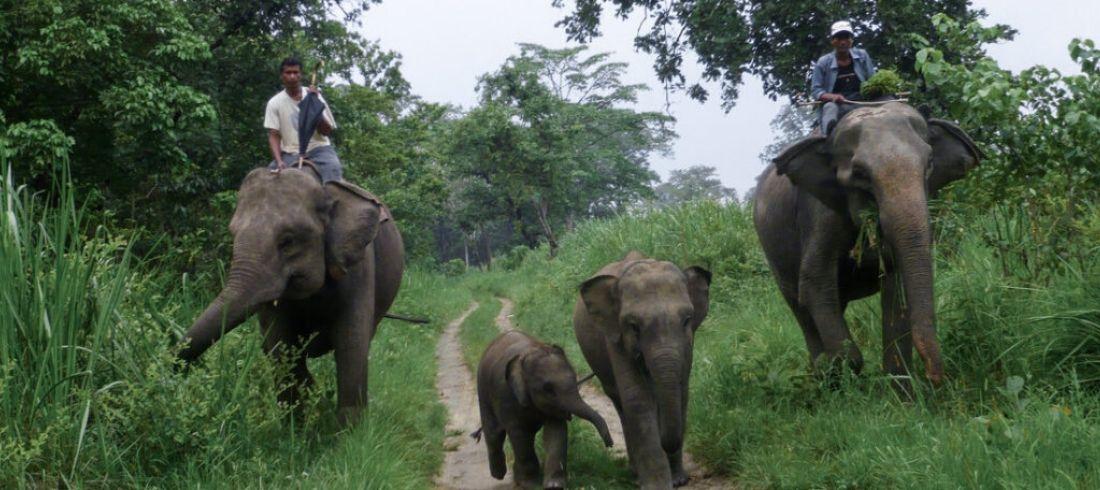 Éléphants au parc National de Chitwan - voyage Népal