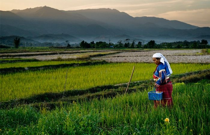 Un été en Birmanie - Asie Online