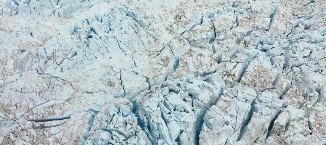 Glacier Fox
