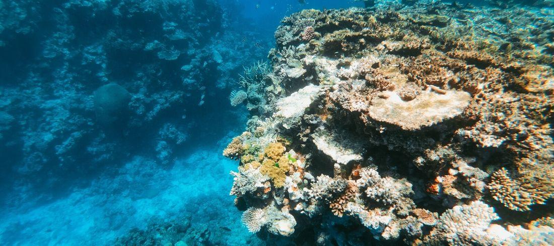 Grande barrière corail Cairns