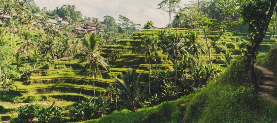 Rizières Tegallalang Bali