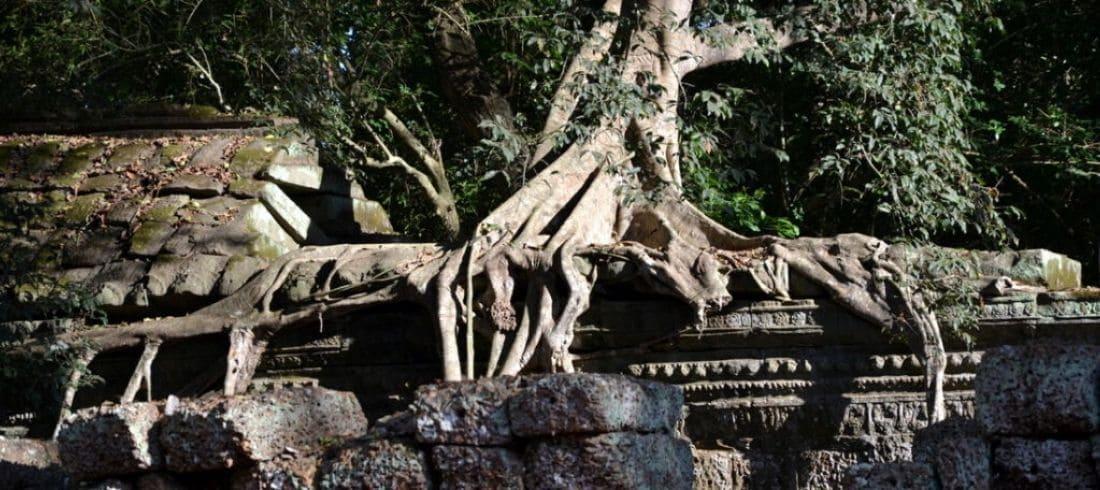 Temple Ta Prohm - Siem Reap - Voyage Cambodge