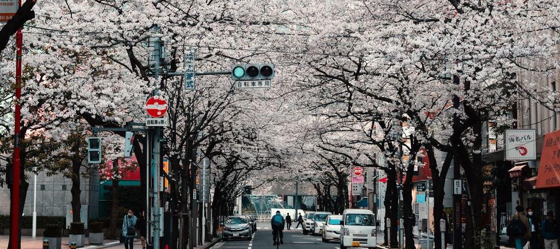 Tokyo - voyage Japon