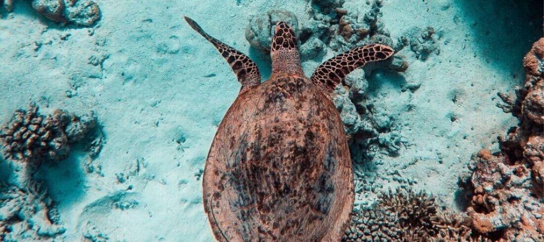 Fonds marins Maldives tortues poissons