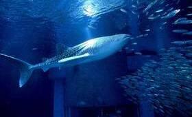 Aquarium Kaiyukan à Osaka - voyage Asie