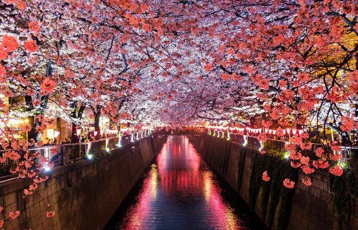 Voyage de noces au Japon - Asie Online