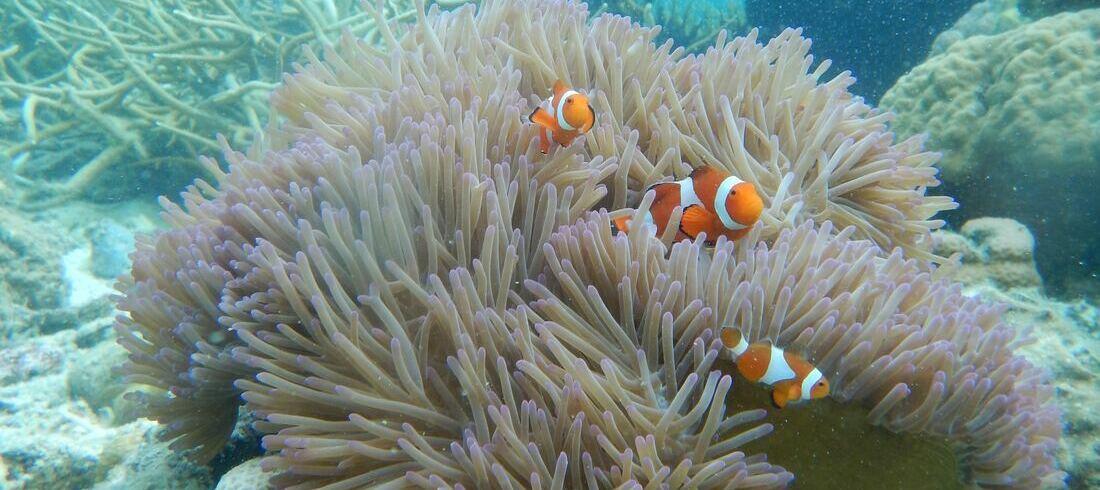 Fonds marins Coron Palawan Nemo