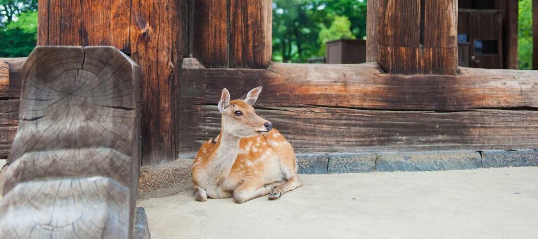 Parc aux daims à Nara - voyage Japon