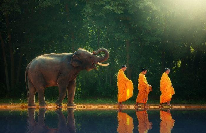 Elephant moines bonzes