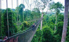 Randonnée dans la jungle - voyage Asie