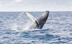 observer baleines nageoires eau mer vagues