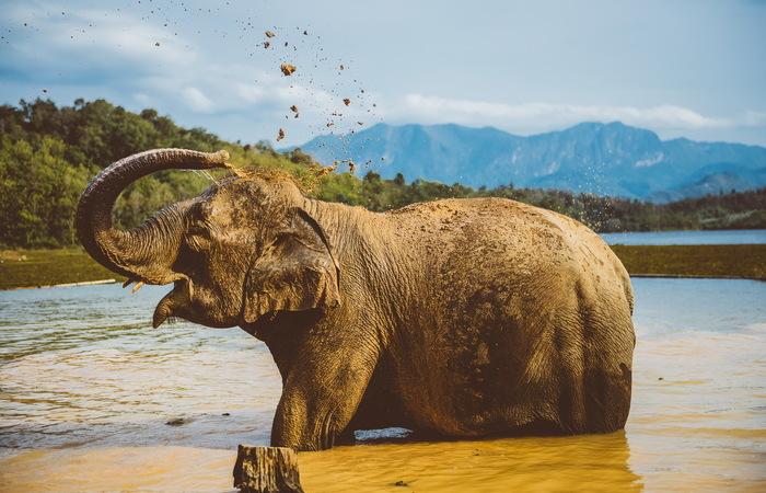 Des temples d'Angkor au royaume des éléphants - Asie Online