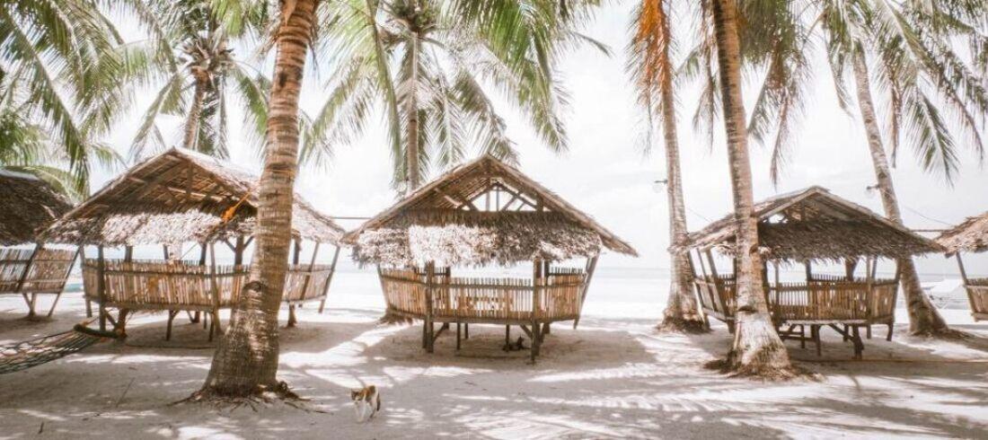 Panglao Bohol plage sable fin blanc cocotiers