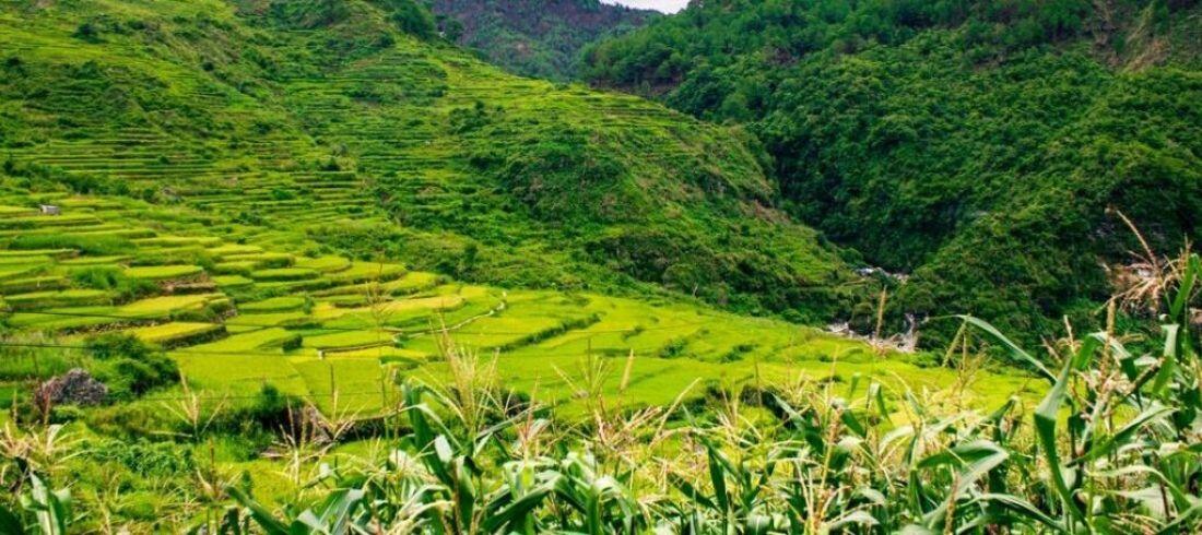 Rizières terrasses Banaue Unesco Batad