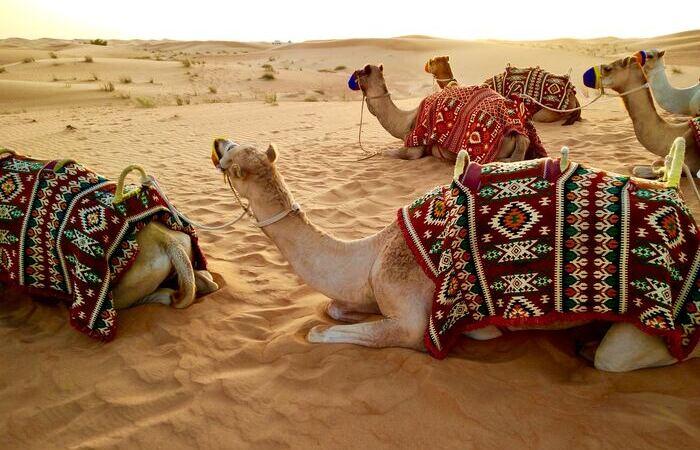 Dromadaire chameau désert safari Emirats