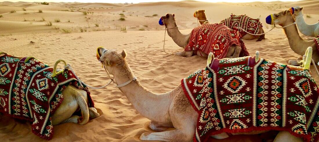 Chameaux dans le désert - voyage Emirats Arabes Unis