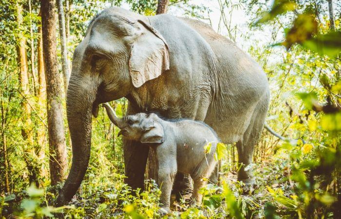 Centre de conservation des éléphants - Rencontre avec les éléphants du Laos