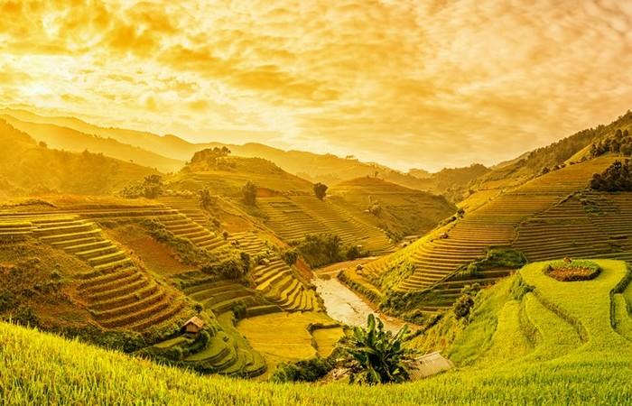 rizieres nord vietnam soleil vert