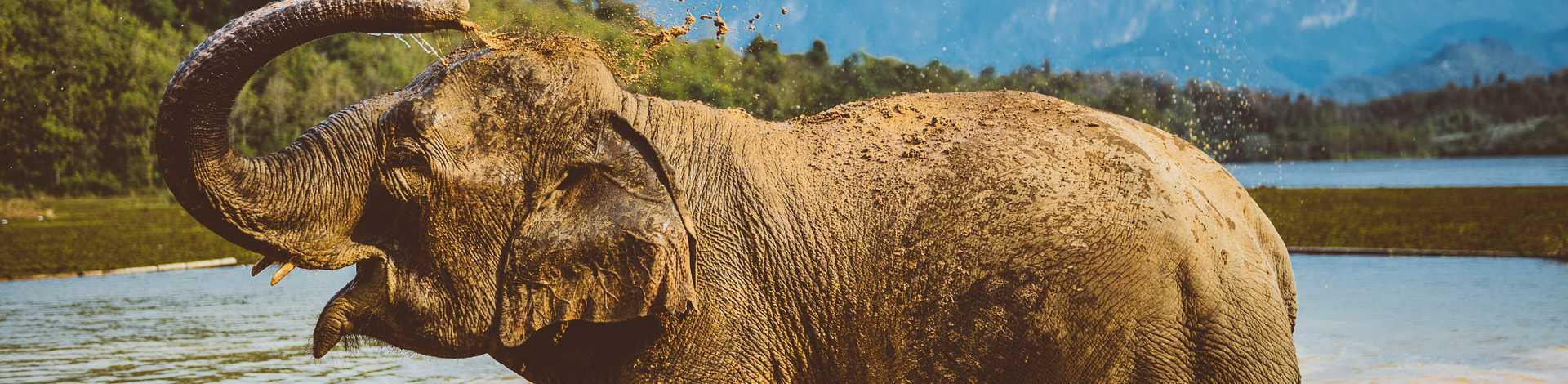 Elephant Conservation Center Laos Xayaboury
