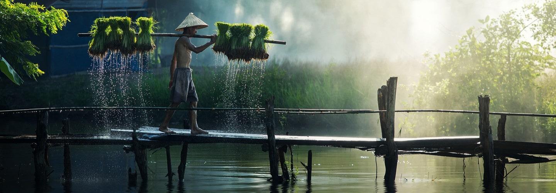 homme marche riz eau pont bois
