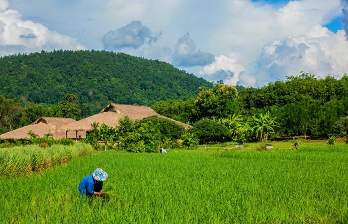 Lisu Lodge nord Thailande Chiang Mai campagne rizières