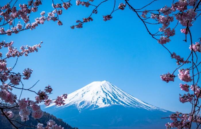 Mont Fuji Japon printemps cerisiers fleurs Hakone