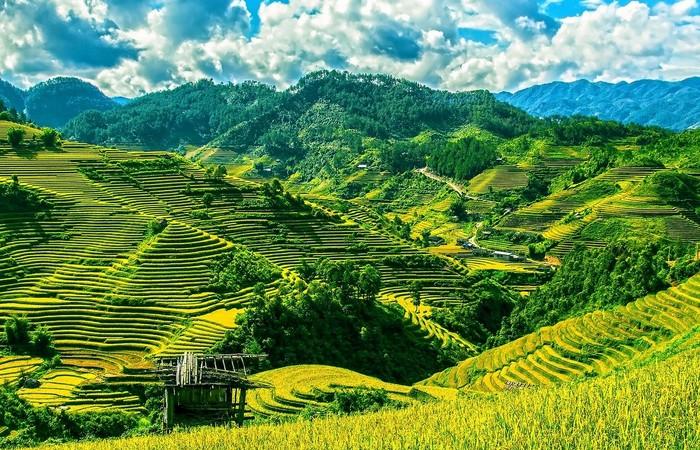 Rizières montagnes vert Mu Cang Chai