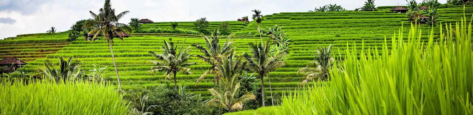 Rizières Bali Jatiluwih nature verdoyante