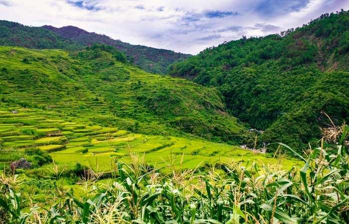 Rizières Luzon Sagada Banaue Unesco