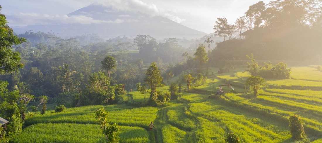 Sidemen rizières Agung
