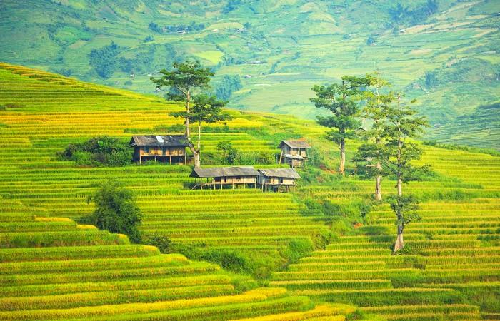 Rizières nord Vietnam Tonkin Sapa Village
