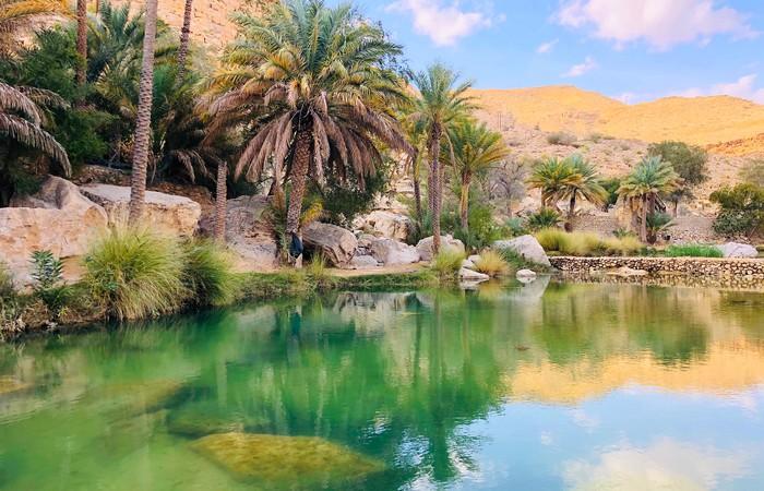 Wadi Oman Désert eau cocotiers palmiers