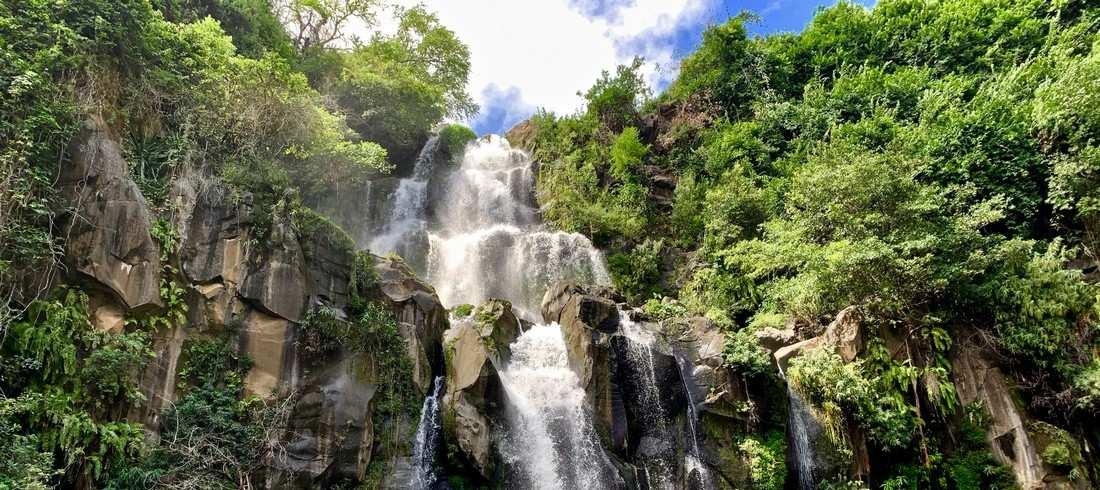 Végétation nature Réunion