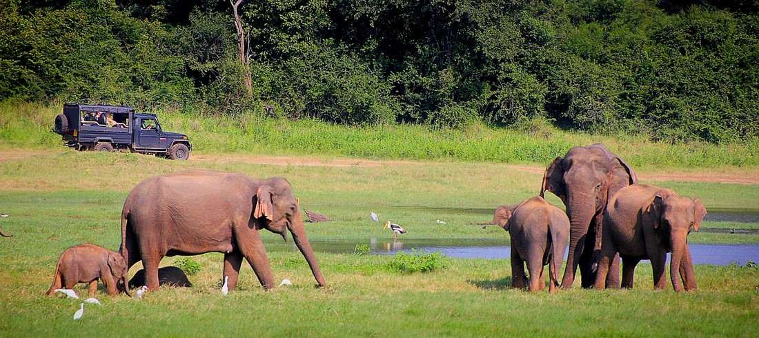 Safari parc national éléphants Sri Lanka